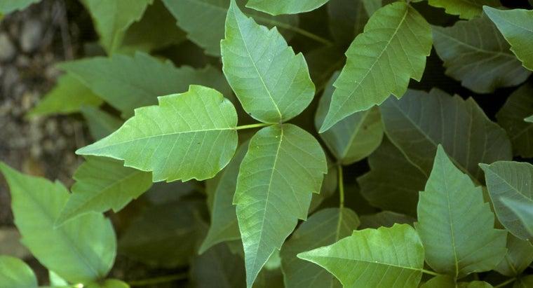 ways-rid-poison-ivy