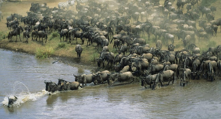 animals-migrate