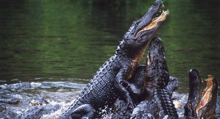 enemies-alligators