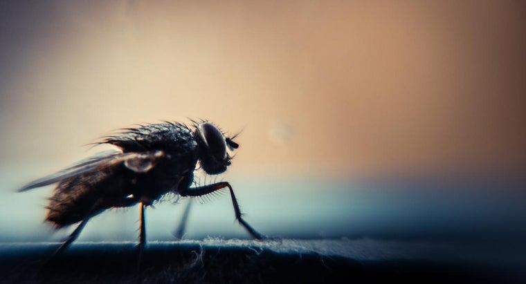 flies-attracted