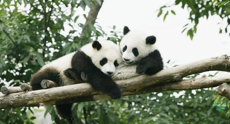 predators-panda