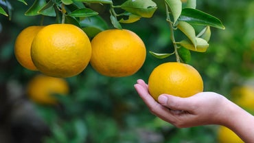 What Are the Benefits of Oranges?