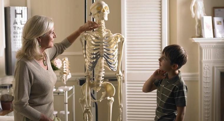 four-types-bones-human-body