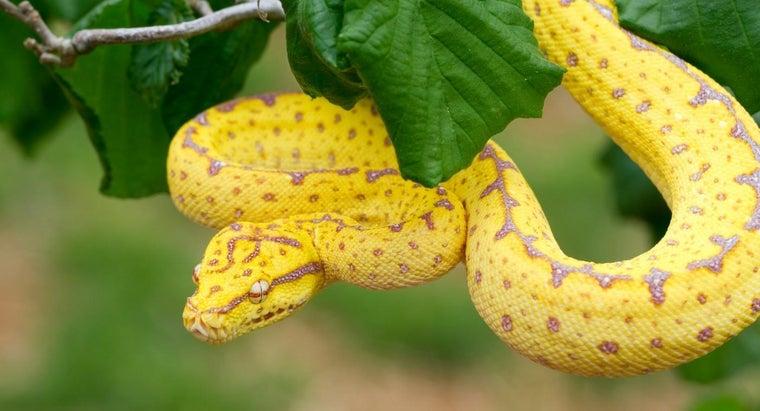 main-characteristics-reptiles