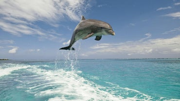 What Climates Do Dolphins Live In?