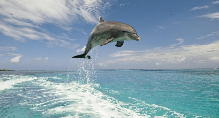 climates-dolphins-live