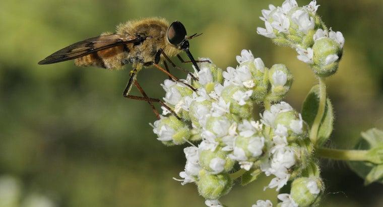horseflies-eat