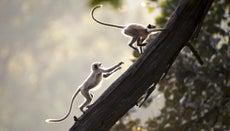 What Do Monkeys Do for Fun?