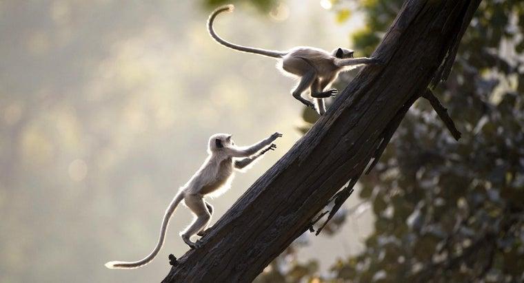 monkeys-fun
