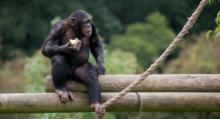 monkeys-eat-jungle