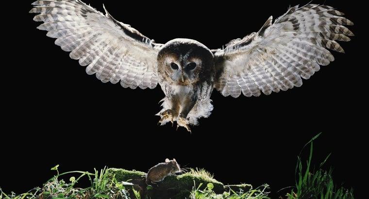 owls-eat