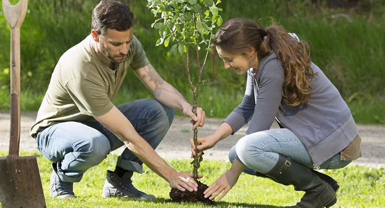 trees-provide