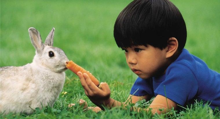 rabbit-eat