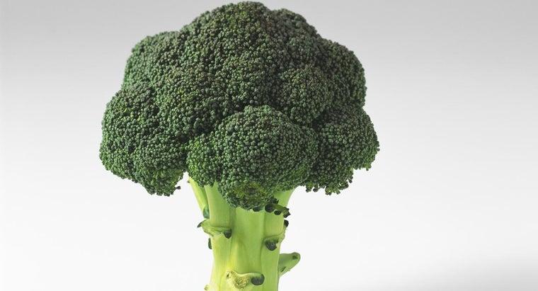 broccoli-body