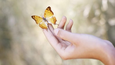 What Is the Meaning of a Butterfly Landing on You?