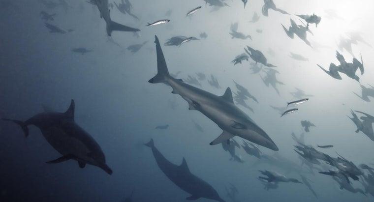 eats-bottlenose-dolphins