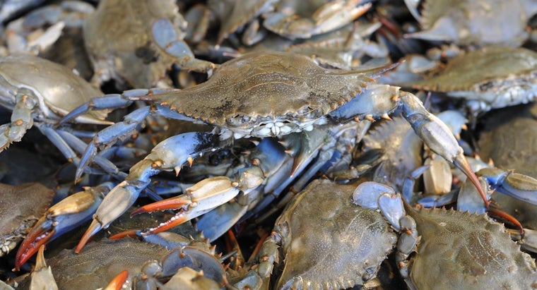 animals-eat-blue-crabs