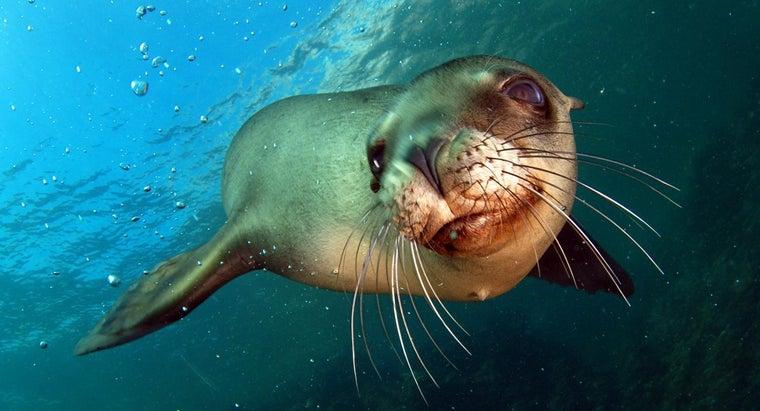 eats-sea-lions
