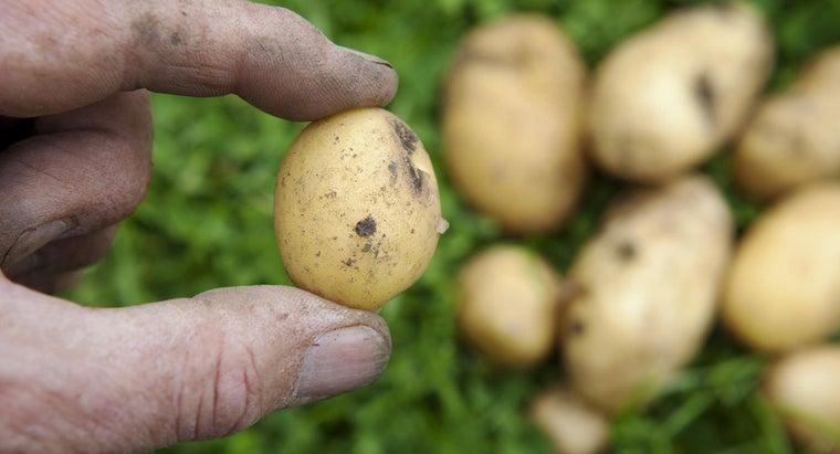 food-group-potato