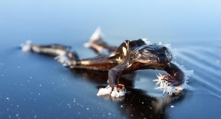 happens-frogs-winter