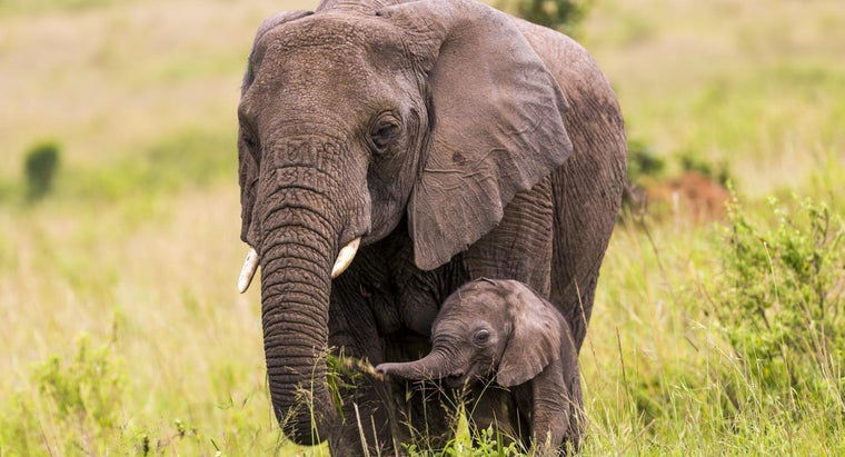 Image result for elephant baby