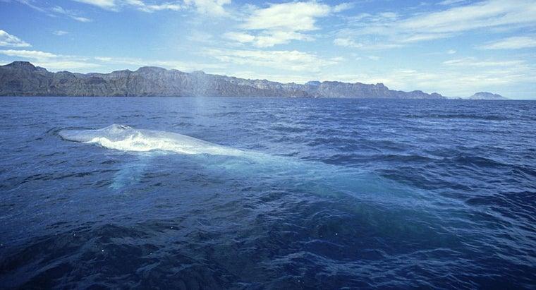 blue-whale-s-habitat