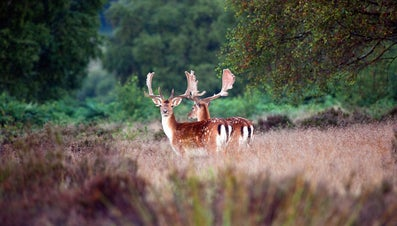 What Is a Deer's Natural Habitat?