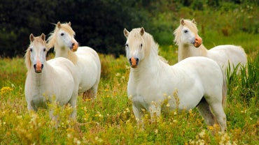 What Is a Group of Horses Called?