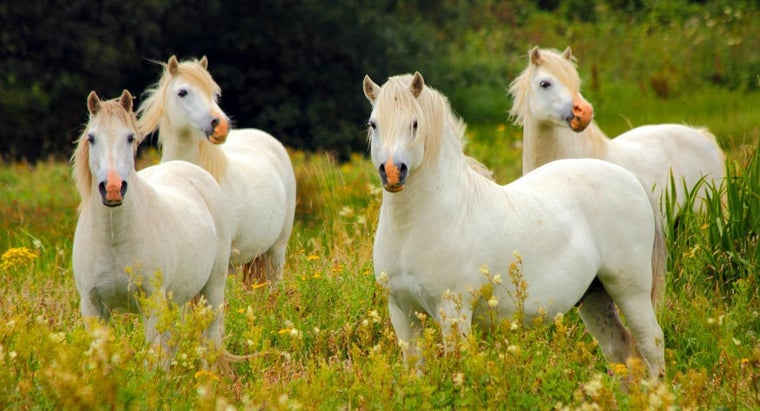 group-horses-called