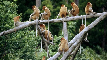 What Is a Group of Monkeys Called?