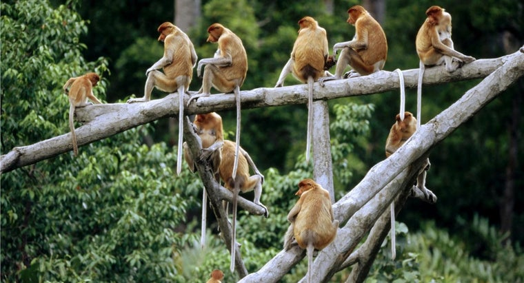 group-monkeys-called