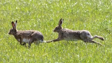 What Is a Group of Rabbits in the Wild Called?