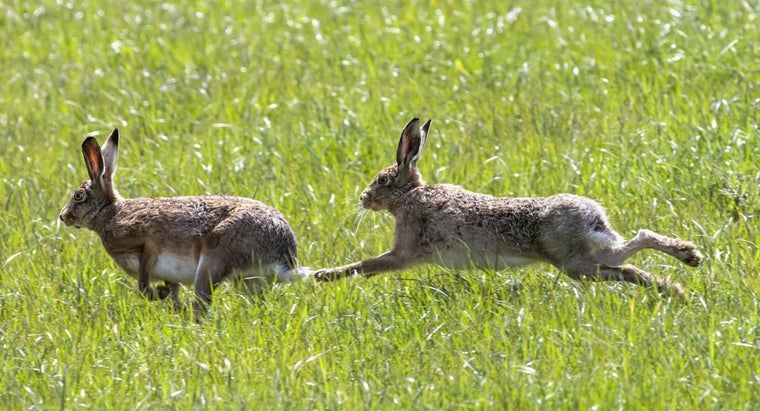 group-rabbits-wild-called