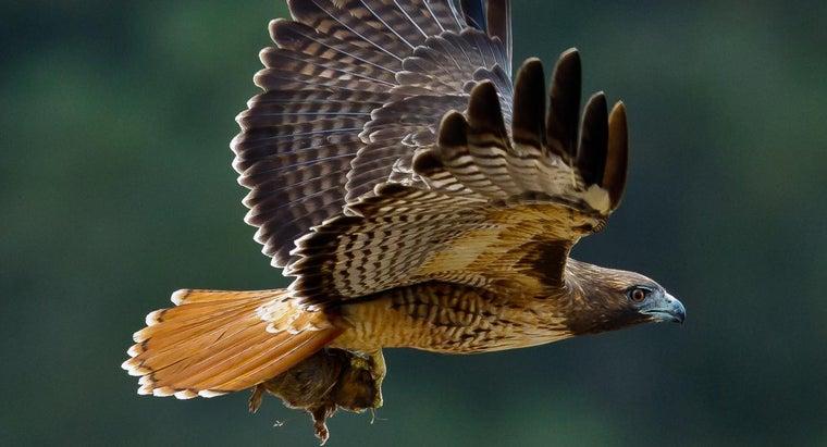 hawk-s-habitat