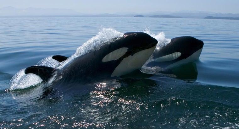 killer-whale-s-niche