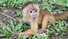 What Is a Monkey's Habitat?