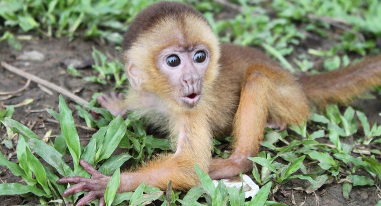 monkey-s-habitat