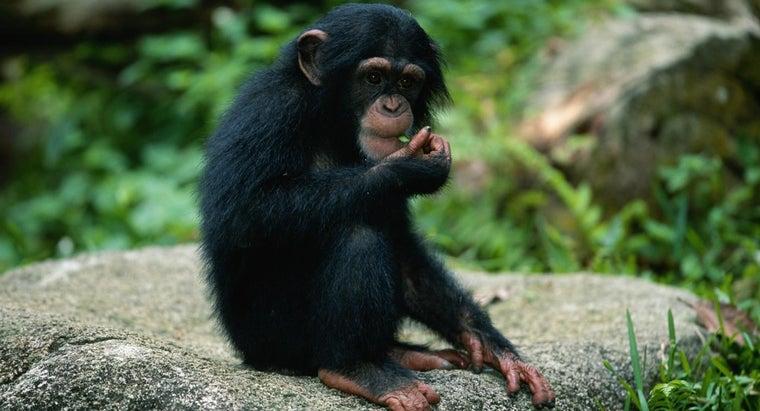 animals-prey-monkeys