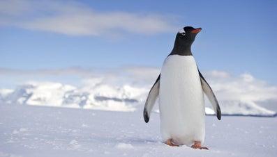What Is a Penguin's Habitat?