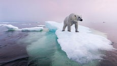 What Is Being Done to Preserve the Polar Bear Population?