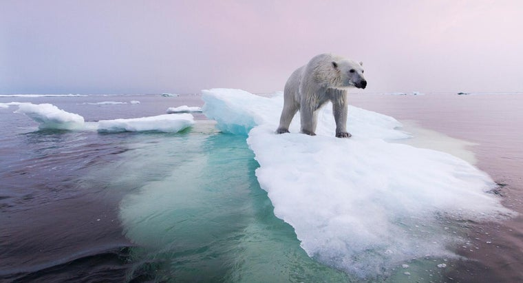 being-done-preserve-polar-bear-population
