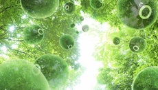 What Is Photosynthesis?