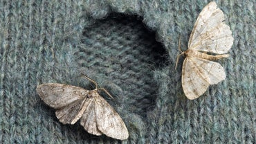 What Is the Average Lifespan of a Moth?