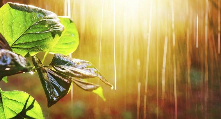 average-yearly-rainfall-rain-forest