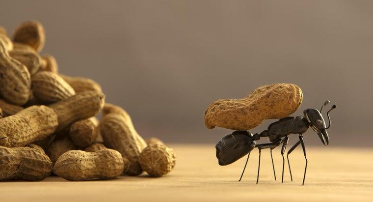 way-rid-ants