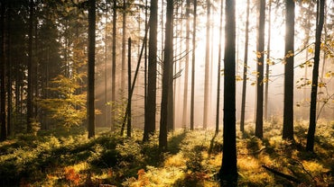 What Is the Difference Between a Forest and a Wood?