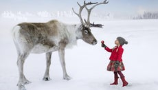 What Is the Difference Between Reindeer and Deer?