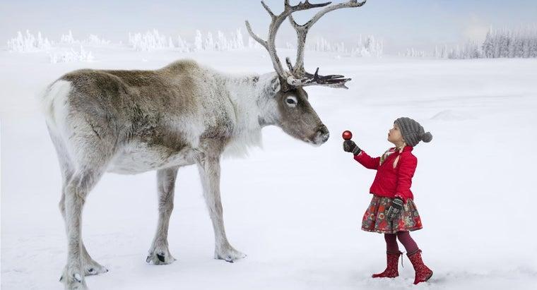 difference-between-reindeer-deer