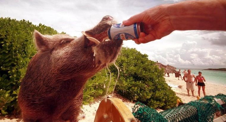 drinking-age-bahamas
