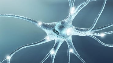 What Is the Function of Nerve Cells?